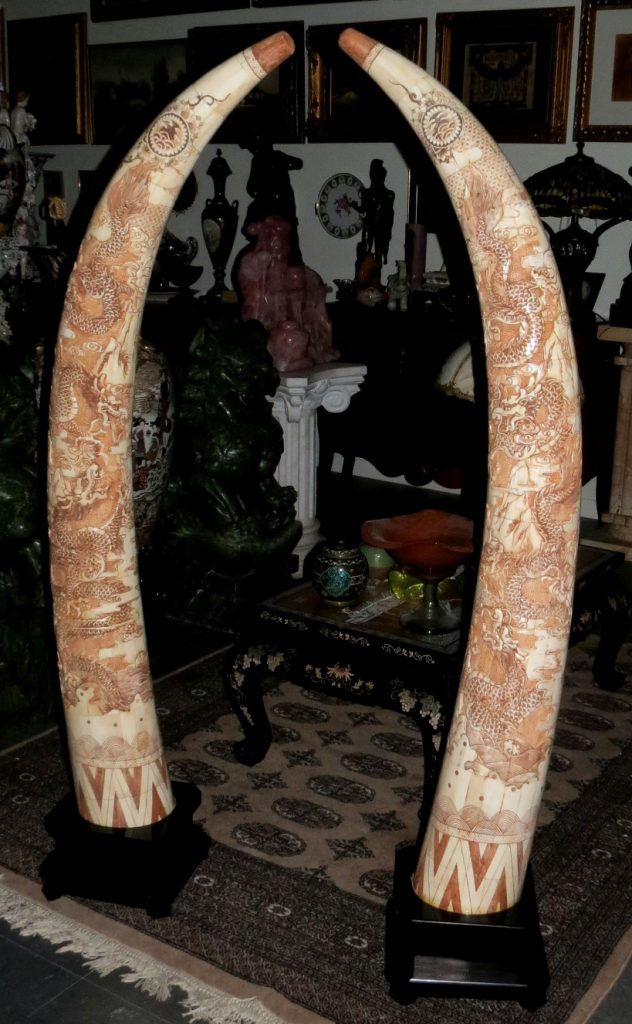 Pair of Bone Horns - Excellent carving - Tusk shaped Image